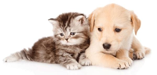 reserva de cachorros